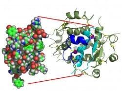 Komplex enzýmov DigeZyme® 1
